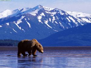 Alaska Libertarians